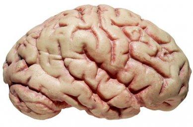 Neuropsychologists study the