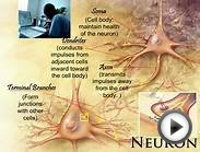 Description of A Neuron